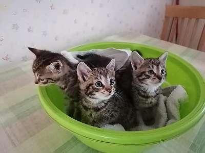 Katze Bild: Baby Katzen Wie Viel Schlaf