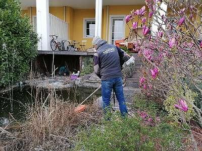 Gartenpflege Pflegeschnitt Gartenarbeiten Hecken Gehölze