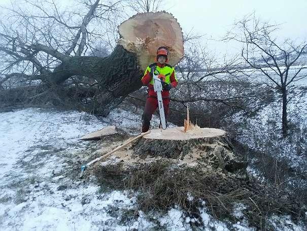 Baum Abtragen Baumentfernung Baum Schneiden Baumschnitt