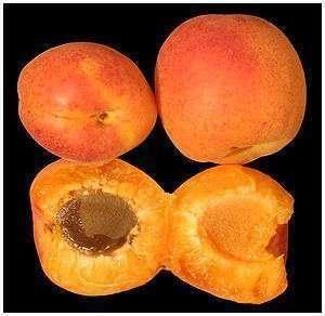 1a veredelte Obstbäume, 2m hoch, 50 Sorten: Marille, Walnuss, Kirsche, Apfel, Birne, Zwetschke, Quitte, Nussbaum u. v. m.
