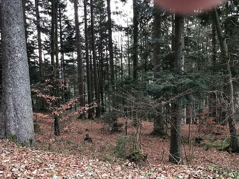 Land u. Forstwirtschaft in Ruhelage zu verkaufen