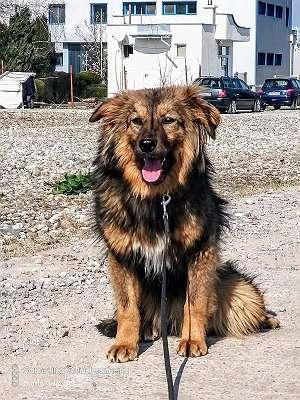 Tita: einfühlsamer Mensch für sensiblen Hund gesucht