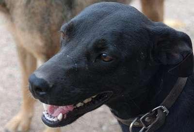 Petya, ein toller Hund sucht ihre Menschen