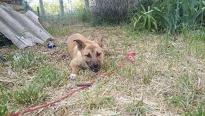 Hundemädchen HAZEL sucht ein Zuhause bei liebevollen und geduldigen Menschen!