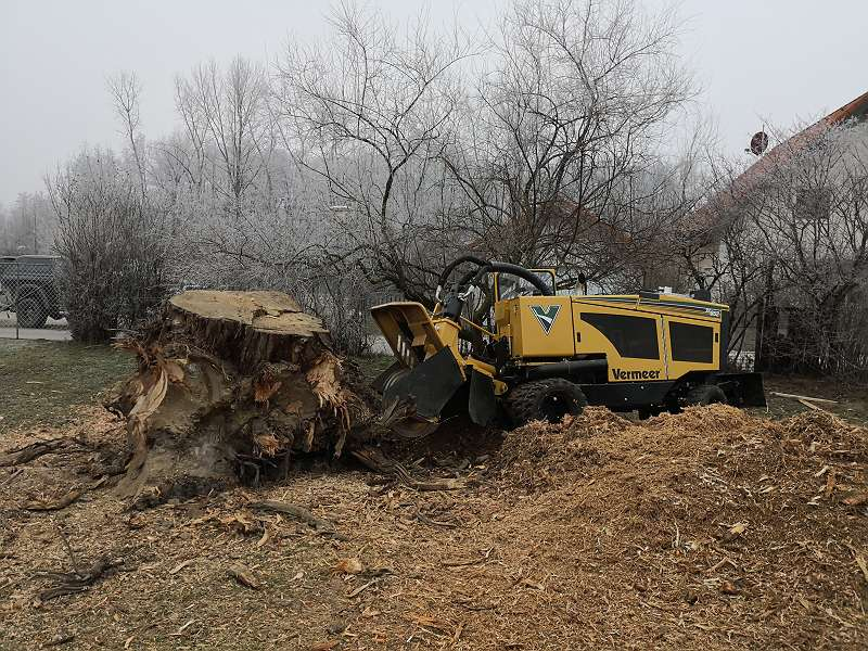 Schlägerungen - Baum abtragen - Baumentfernung - Rodung - Baum fällen