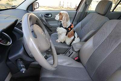 Hunde Multifunktionsdecken / Kofferraumschutz / Hundezubehör