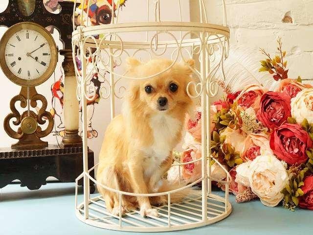 offene k fige perfekt f r pflanzen und deko vogel. Black Bedroom Furniture Sets. Home Design Ideas