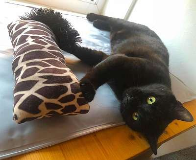Verschmuste Panther- Plauderkatze MONA sucht Bettschlafplatz mit Freigang