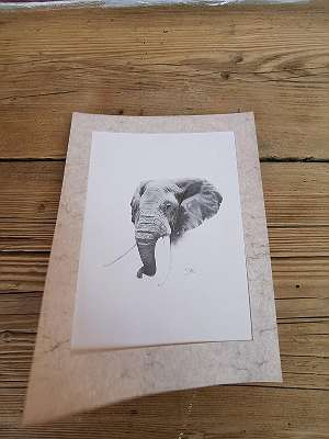 Elefantenportrait Bleistiftzeichnung