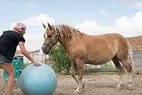 Pferdesprache Teil 2