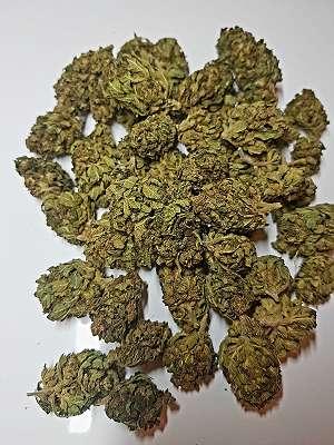 Ak47 X5 Haze 8,81% CBD Indoor Blüten