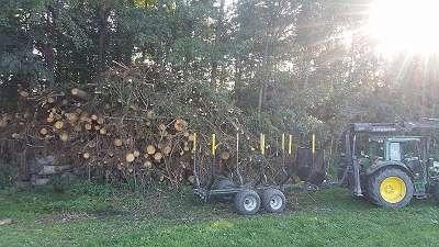 Holzschlägerungen / Baumfällungen jeglicher Art, Waldbetreuungen, Käferschlägerungen, Kulturpflege