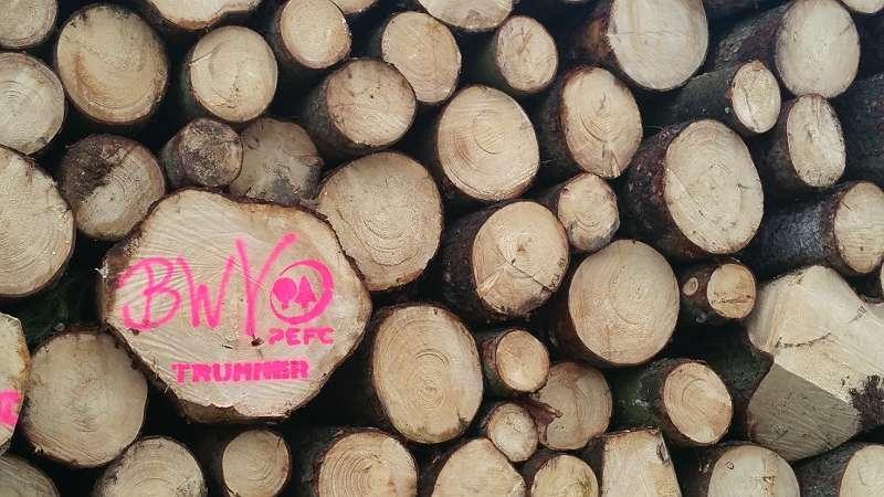 Holzschlägerungen / Baumfällungen jeglicher Art, Waldbetreuungen, Käferschlägerungen, Kulturpflege in Linz, Linz Land, Wels, Wels Land
