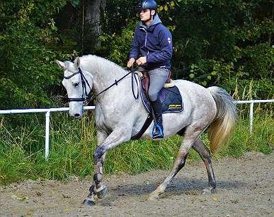 Pferd Plus: Damit Ihr Traum vom eigenen Pferd Wirklichkeit wird!