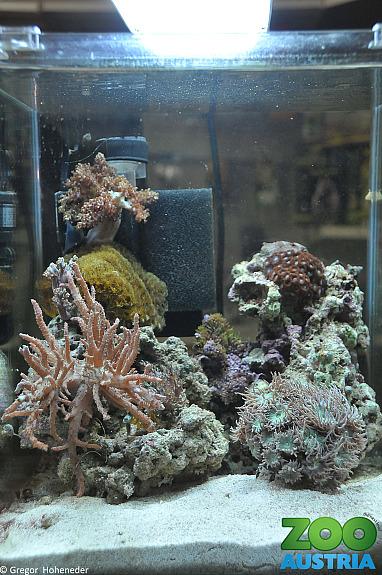 Salzwasser nano aquarium komplettset 420 1020 wien for Salzwasser aquarium