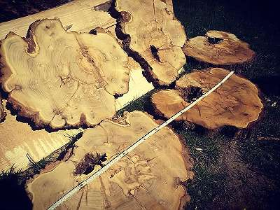 Schnittholz Baumscheiben Holz Tische Pfosten Bohlen Drechselholz Tischplatten Bauholz KantholzMesserschalen Bastelholz... Buche Eiche Robinie Walnuss Kastanie Birne Esche Kirsche uvm.