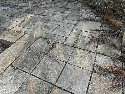 -75% Ausstellungsabverkauf Sandsteinplatten India verschiedene Formate - Götzinger Gartengestaltungs Produkte 2020