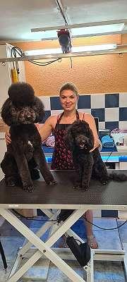 Hundefriseur-Groomer-Ausbildung