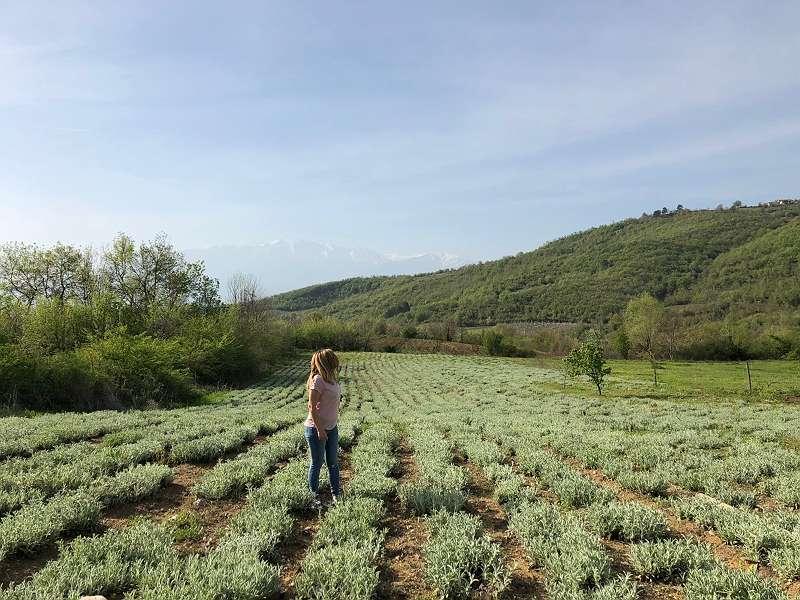 griechischer Bio Bergtee 40g