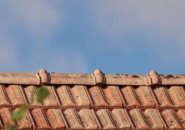 FRÜHLINGSAKTION ! Entferung von Algen, Bewuchs auf Gehwegen und Hausmauern
